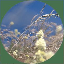 teaser-dr-ernst-spektrum-allergien
