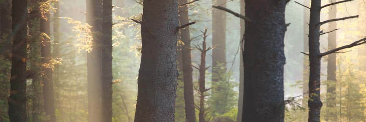Waldspaziergänge stärken das Immunsystem